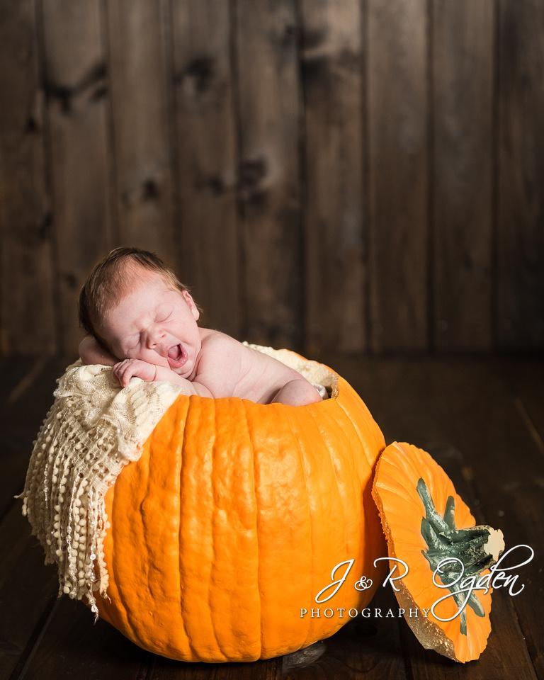 Newborn in Pumpkin - Fall Newborn Photographers Bangor Maine