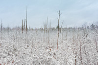 Scenic snow covered bog